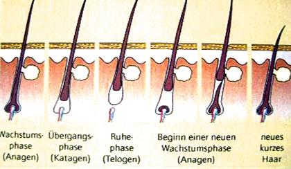 Die dauerhafte Haarentfernung ist von den Wachstumsphasen des Haars abhängig.
